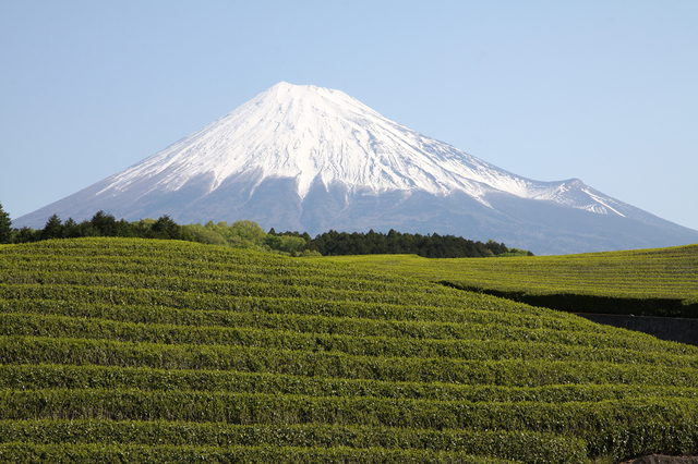 Tea farm & Mt. Fuji